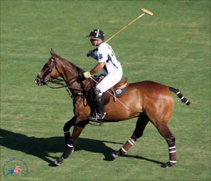 Califa with Mariano Aguerre up; 2009 Argentine Open; (photo courtesy of American Polo Horse Association)