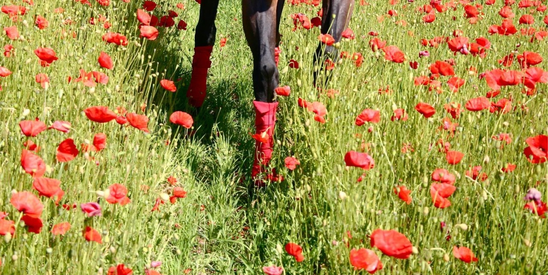 poppies-and-legs Horse Tales