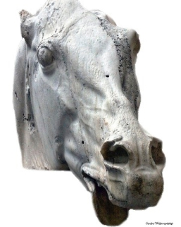 head-of-a-horse-of-selene-partennon-on-white.jpg
