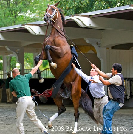 Barbara Livingston Saddling a racehorse